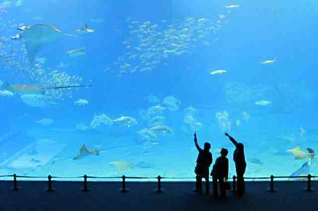 美ら海水族館へ行こう!!夏休みは子供も大喜び!!