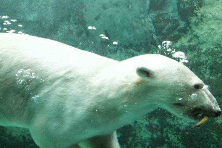 【旭山動物園、洞爺湖、札幌タワー】北海道1週間の旅♪