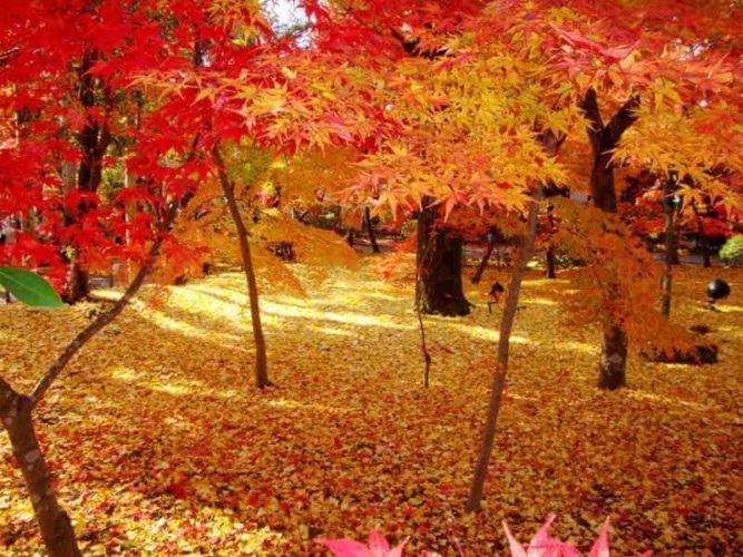 【高台寺~永観堂】京都の紅葉ベスト5!一生に一度は観ておきたい!!
