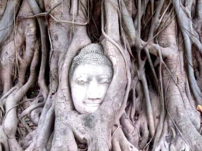 ワット・マハータートの木の根に囲まれた仏像の頭