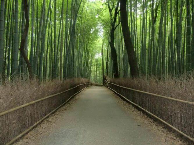 京都・嵐山観光は紅葉だけじゃない!蓮も竹も幻想的!!