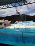 伊東小涌園と下田海中水族館を満喫♪飲める温泉にイルカショー♪