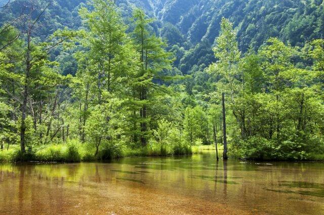 田代池は日本庭園のような美しさ