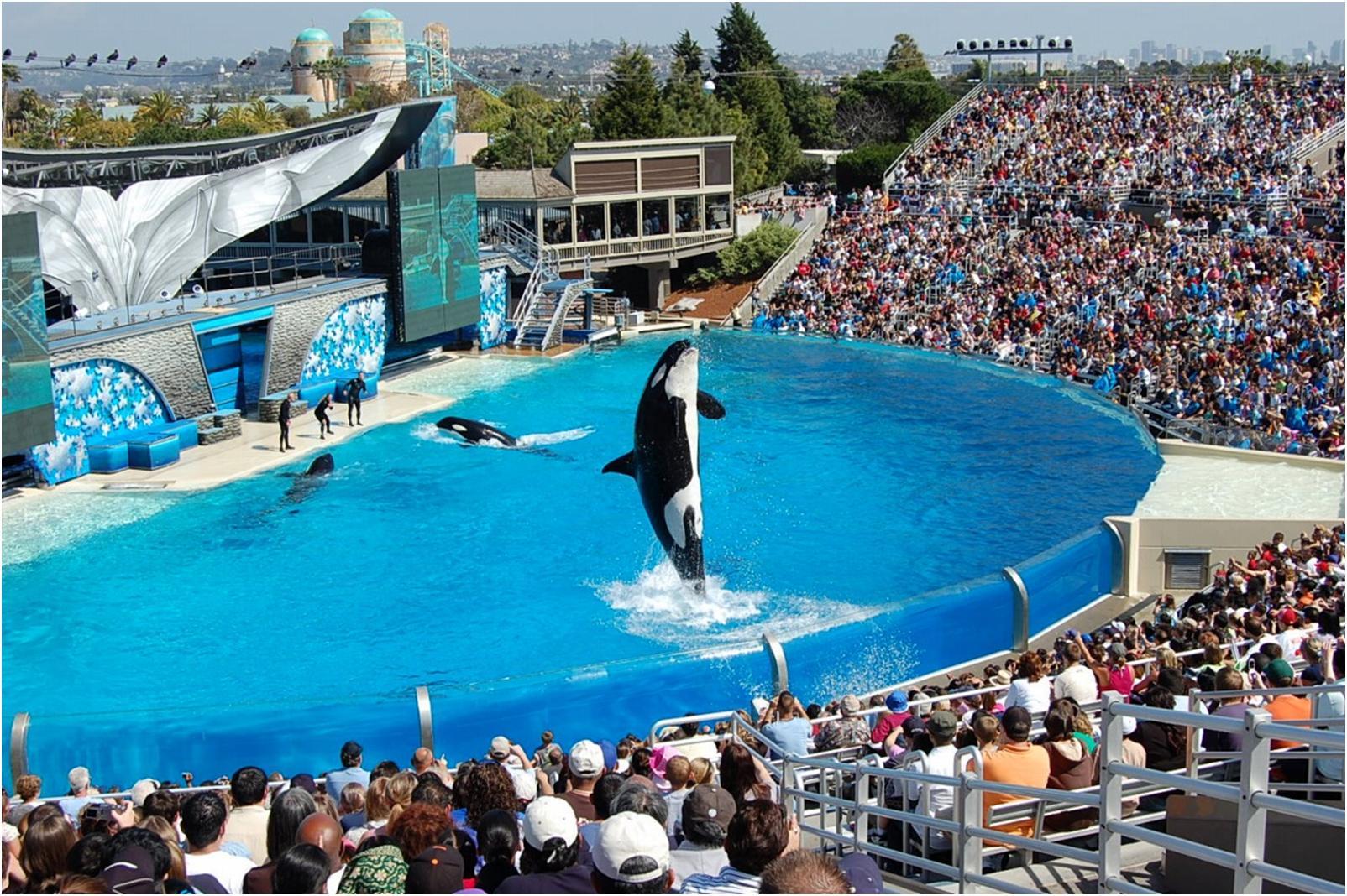 【シーワールド・サンディエゴ】シャチ、イルカと触れ合おう!