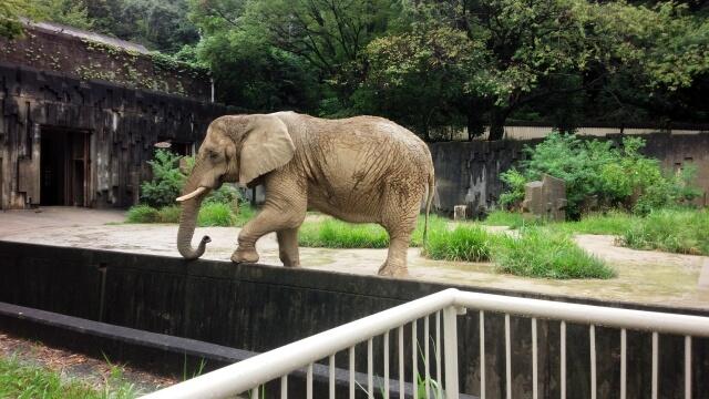 東山動物園 赤ちゃんもいっぱい!ぜひ行ってみたい!