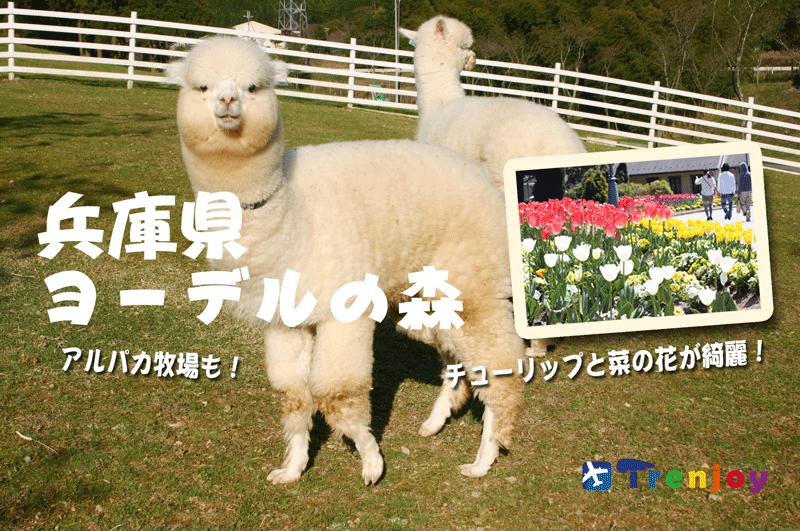 自然とふれあい子ども大喜び、家族みんなで兵庫県ヨーデルの森!