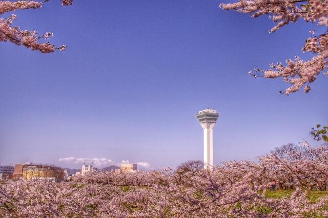 五稜郭タワーと春の桜