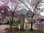 熱海梅園で春の訪れを感じる旅!熱海駅周辺遊びも