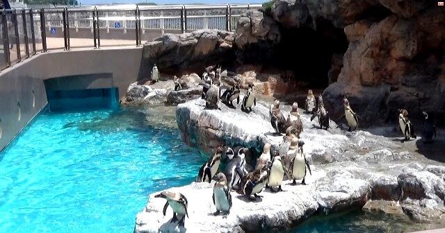 アクアワールド茨城県大洗水族館のペンギンショー