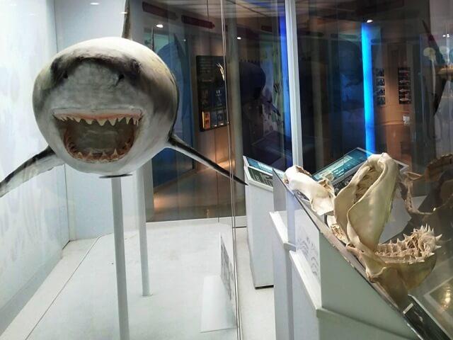 アクアワールド茨城県大洗水族館のサメ