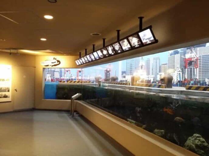 しながわ水族館 東京湾に注ぐ川