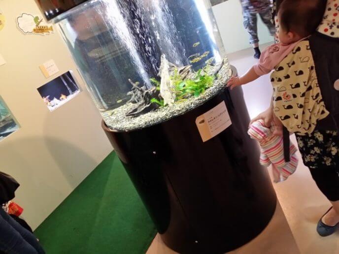 埼玉県羽生市にあるさいたま水族館 展示