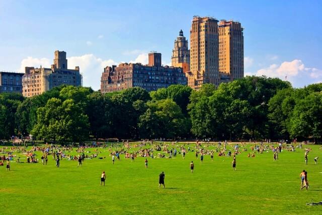 セントラル・パークの芝生