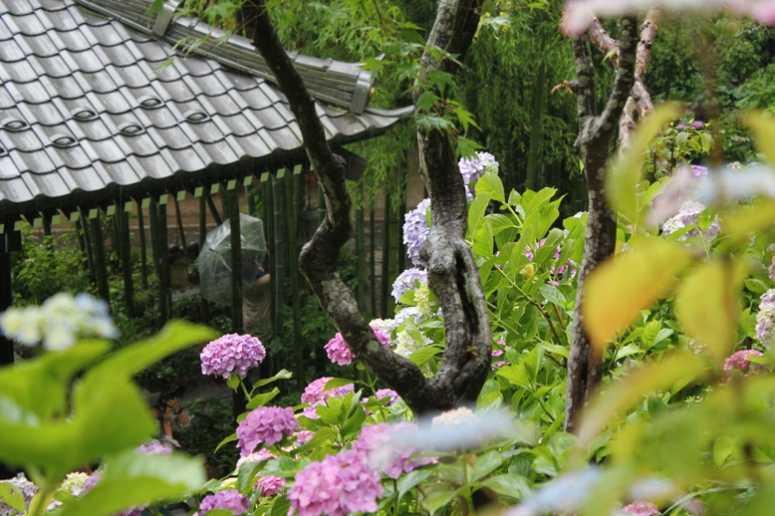 鎌倉の長谷寺の混雑具合と入場規制