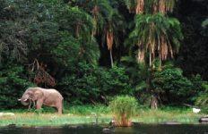 100万年の歴史を持つアフリカ・タンザニアの「ヴィクトリア湖」