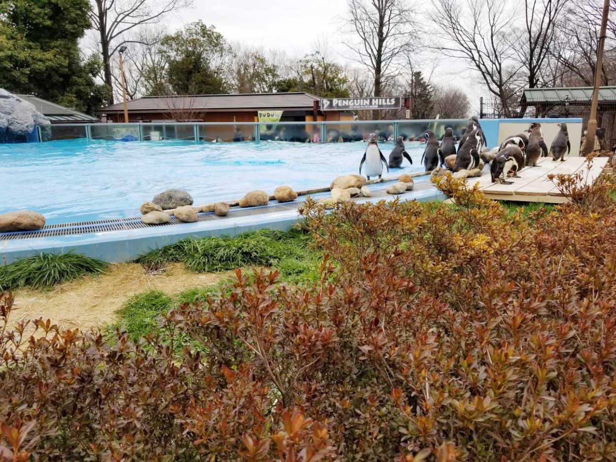 埼玉県こども動物自然公園のペンギン